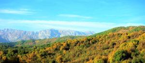 Ассоциация лесопользователей и землепользователей Кыргызстана
